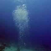 dive-008-004