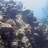dive-020-012