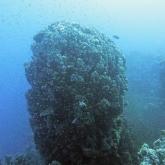 dive-021-025