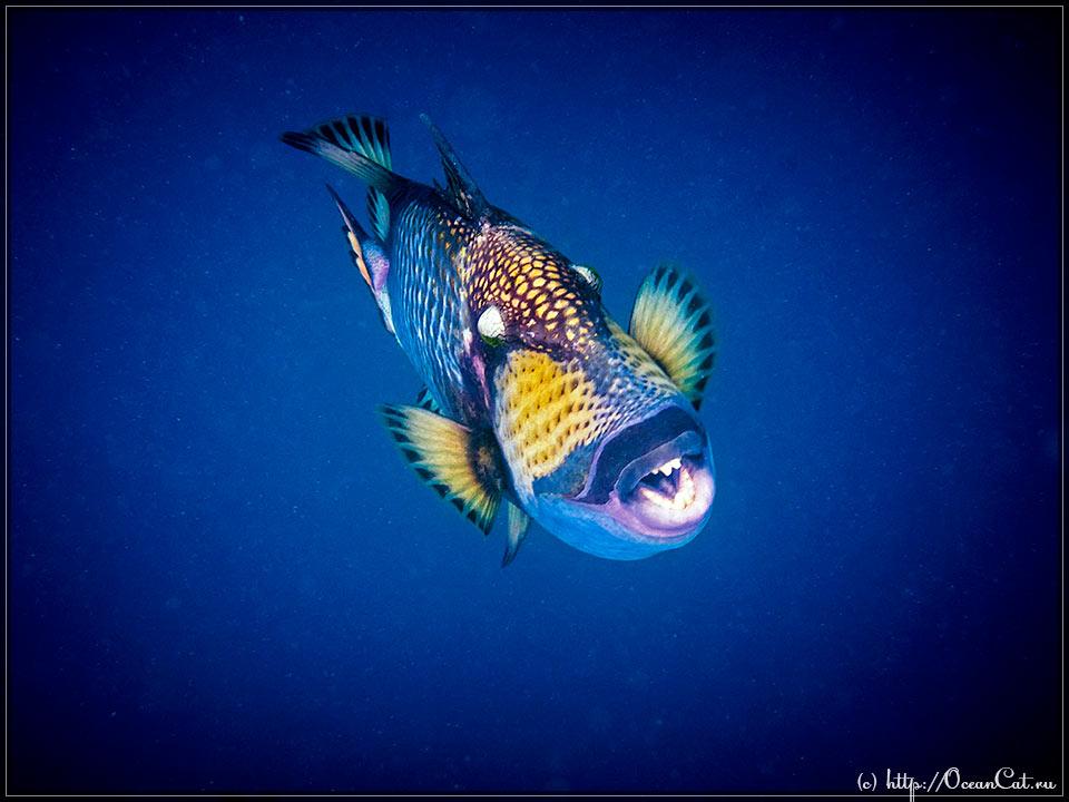 http://www.oceancat.ru/wp-content/gallery/dive189/2016-09-22-189-003.jpg