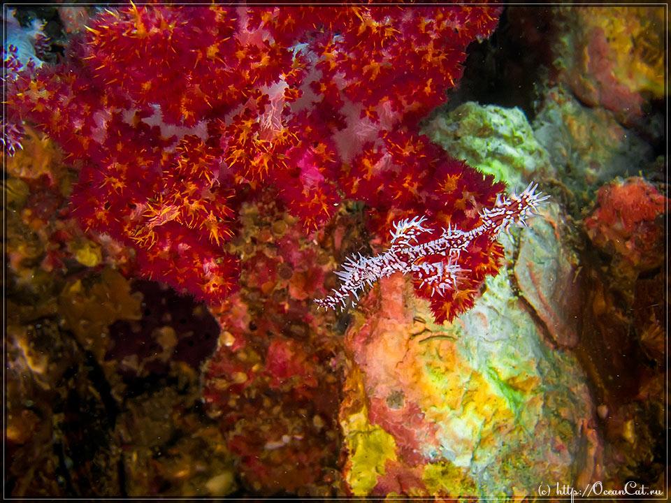 http://www.oceancat.ru/wp-content/gallery/dive214/2017-03-10-214-059.jpg