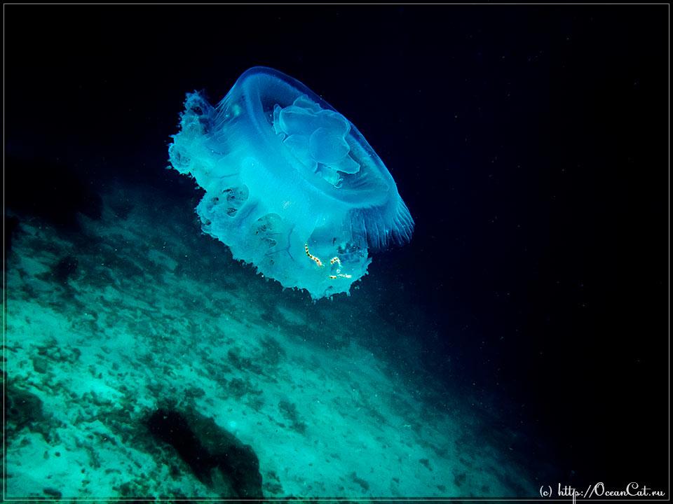 http://www.oceancat.ru/wp-content/gallery/dive223/2017-03-16-223-002.jpg