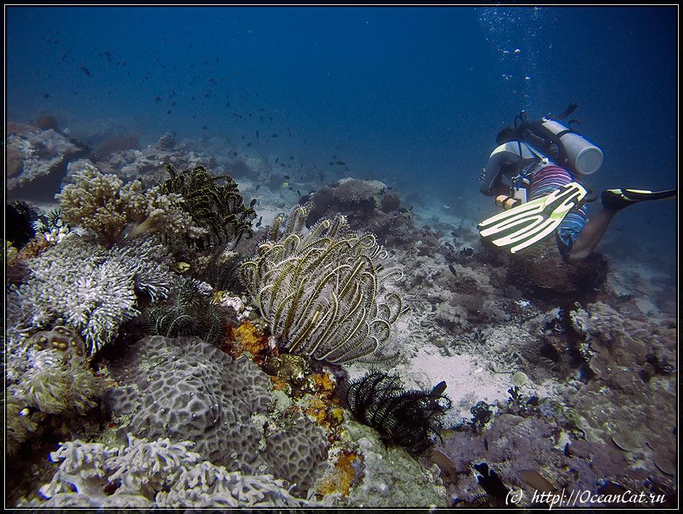 http://www.oceancat.ru/wp-content/gallery/dive232/2017-06-03-232-008.jpg
