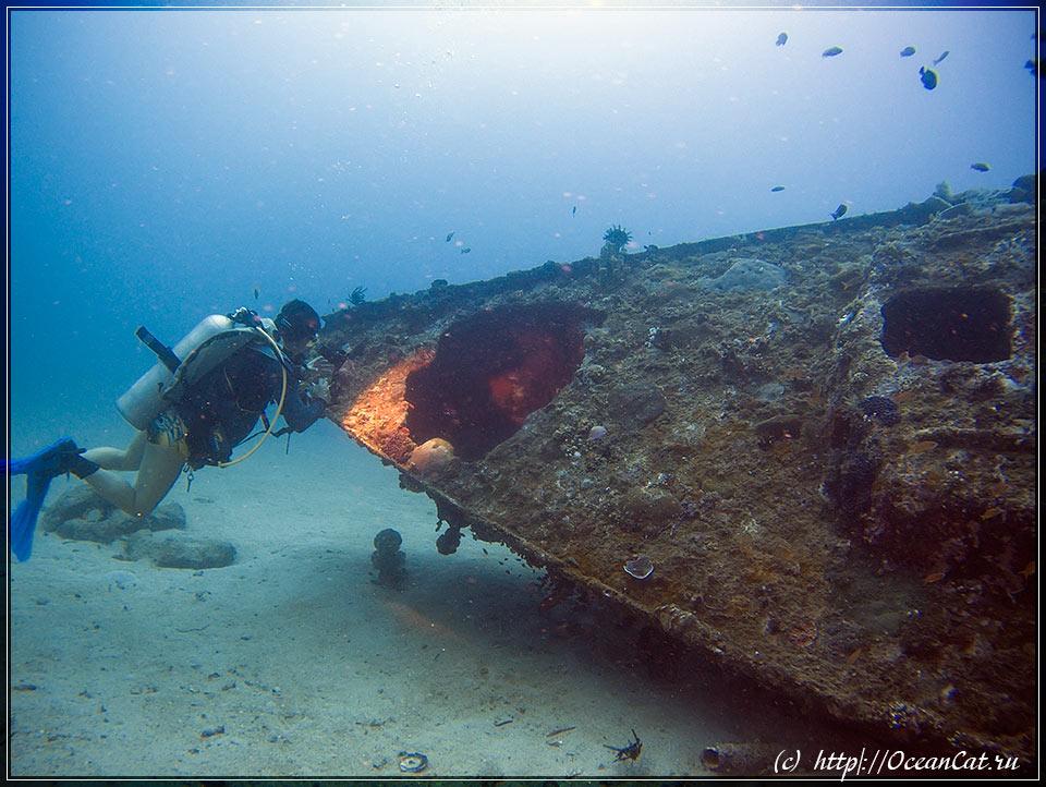 http://www.oceancat.ru/wp-content/gallery/dive236/2017-06-06-236-018.jpg