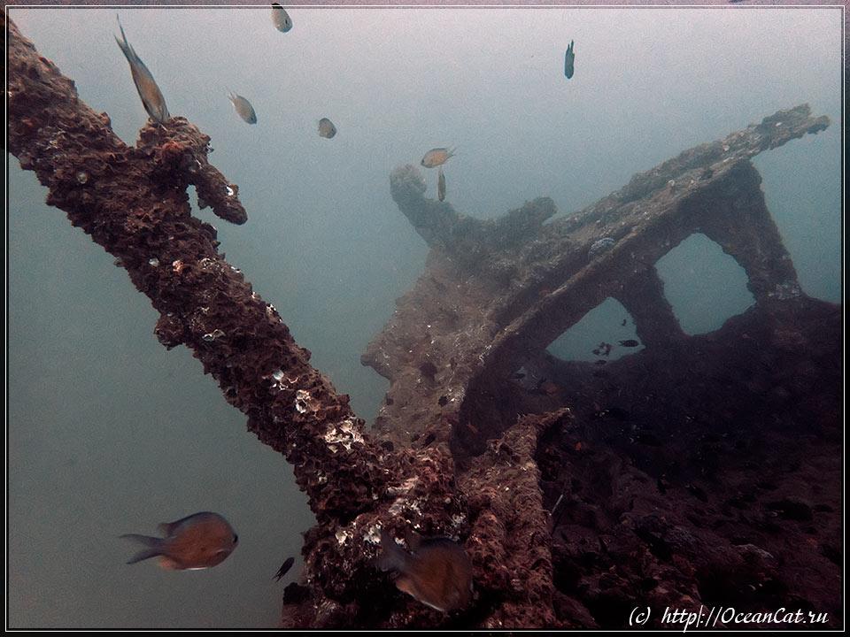 http://www.oceancat.ru/wp-content/gallery/dive242/2018-01-04-242-014.jpg