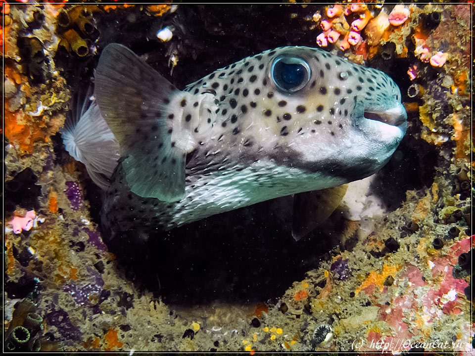 http://www.oceancat.ru/wp-content/gallery/dive243/2018-01-04-243-044.jpg