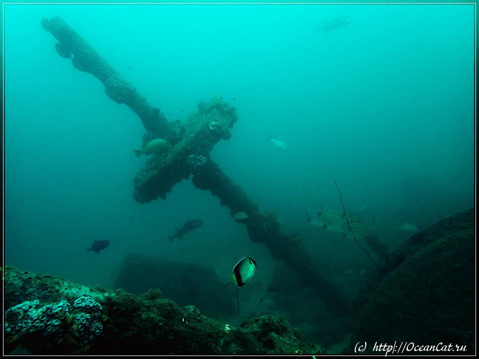 http://www.oceancat.ru/wp-content/gallery/dive247/2018-01-06-247-044.jpg